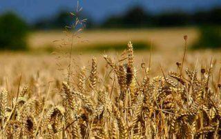 Farming Bigger Losses for Taxpayers