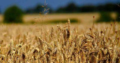 Farming Bigger Losses for Taxpayers