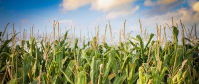 Biomass Crop Assistance Program Fact Sheet