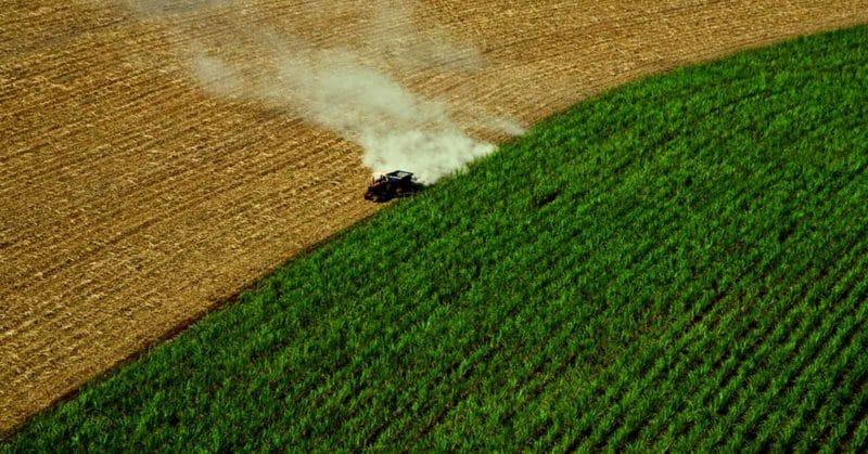 harvester harvesting corn