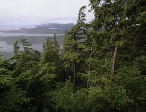 StatementForest Service Plan to Allow More Roads in the Tongass Will Cost TaxpayersA Roadless exemption would mean more roads and more money-losing timber sales in the Tongass