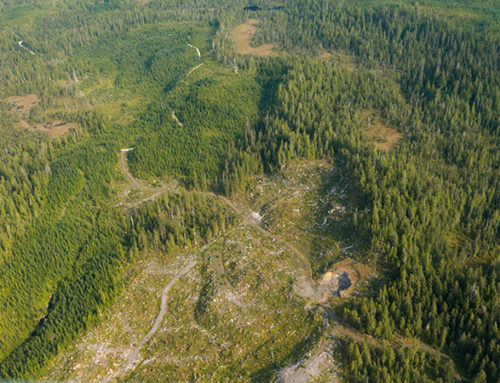 Comments TCS Raises Concerns With Massive Tongass Timber ProjectPrince of Wales Timber Sales Could Lose Taxpayers Hundreds of Millions.