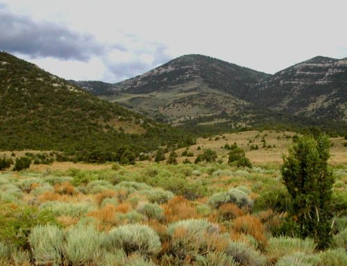 Press ReleaseNew Report Says Utah Federal Lands Are Being Developed For Rock Bottom PricesOutdated oil and gas policies cost taxpayers millions of dollars every year in Utah
