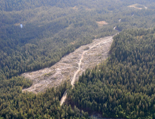 ReportCutting Our LossesA new report documenting 20 years of money-losing timber sales in the Tongass National Forest